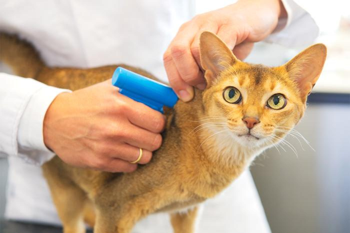 В России начнется маркировка домашних животных, за которую хозяева должны будут платить