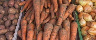 Картофель и морковь подорожали за последний год на треть. Выяснены причины подорожания