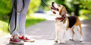 В России запретят гулять с собаками детям до 14-ти лет и лицам в пьяном виде